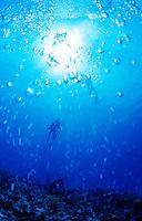 Scuba diver at East Wall, St Croix, US Virgin Islands