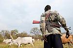 SOUTH SUDAN, Rumbek, Dinka man protect the Zebu cattle of his family with AK-47 rifle against Nuer cattle raider / SUED SUDAN Rumbek , Dinka Hirte schuetzt Zeburinder vor Viehdiebstaehlen durch Nuer mit seinem Kalaschnikow Maschinengewehr