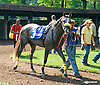 Ms. Scarlet Fever before The White Clay Creek Stakes at Delaware Park on 7/29/15