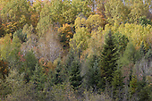Late fall color foliage,mixed vegetation forest in the Lanaudiere area of Quebec