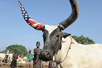 SOUTH SUDAN  Bahr al Ghazal region , Lakes State, village Yeri cattle camp near Rumbek, bull horn wrapped in US flag / SUED-SUDAN  Bahr el Ghazal region , Lakes State, Dorf Yeri, Dinka mit Zeburindern im cattle camp bei Rumbek | <br />