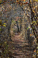 Woodland path, Martha's Vineyard, Massachusetts, USA
