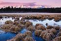 Canada,Yukon; Grass in frozen lake, late fall, sunrise
