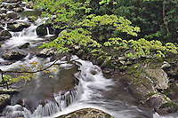Cascading stream, Great Smoky Mountains National Park, Tennessee