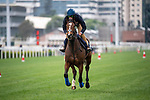 SHA TIN, HONG KONG – December 5: Zaaki at trackwork on December 5 at Sha Tin Race Course in Hong Kong before starting in the Longines Hong Kong Mile. Michael McInally/Eclipse Sportswire/CSM