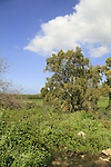 Israel, Einot Gaaton in the Upper Galilee
