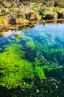 Pupu Springs, the Clearest Springs in the World, Golden Bay, South Island, New Zealand. Pupu Springs (Te Waikoropupu Springs) are the clearest springs in the world. Walkways and paths allow you to enjoy walking through the ferns and forest that surround the springs.