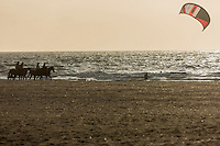 France, Calvados (14), Côte Fleurie, Deauville, chevaux sur la plage  // France, Calvados, Cote Fleurie, Deauville, horses on the beach