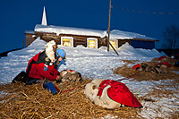 Paul Gebhardt boots his dogs in front of the Ruby Bible Church shortly after sunset as he readies to leave after his 8-hour layover during the 2010 Iditarod, Interior Alaska