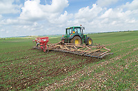 Harrowing organic spring barley to remove weeds - Lincolnshire Wolds, May