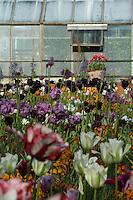 The 'cuttings' garden at Petersham Nursery in spring