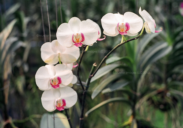 Orchid greenhouse in Chitwan National Park, Nepal.