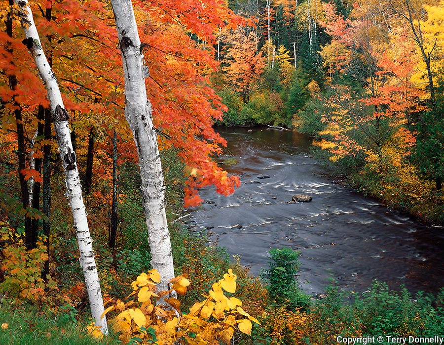 Pattison State Park, WI<br /> View of the Black River flowing thru a hardwood forest in fall color