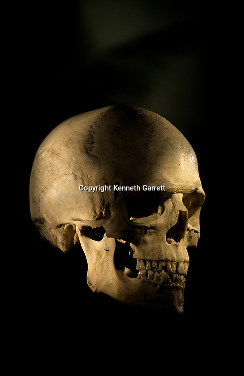 Modern Human Skull, George Washington University.