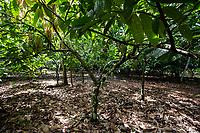 Sede da cooperativa na cidade de Tom&eacute; A&ccedil;&uacute;.<br /> Produ&ccedil;&atilde;o, colheita e estocagem de cacau organico nordeste do estado<br /> Tom&eacute; A&ccedil;&uacute; Par&aacute;, Brasil.<br /> Foto Carlos Borges<br /> 11/05/2016