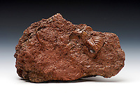 """""""Clinton"""" ore containing a fossil replaced with hematite. The fossil is the pygidium of a trilobite (possibly Calymene niagarensis). Lower Silurian, Brassfield Limestone, near Bainbridge, Ohio"""