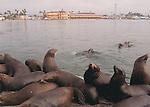 Marine Wildlife.  5x7 Postcards.  Frank Balthis