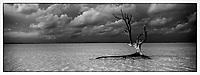 Iles Bahamas /Ile d'Eleuthera/Harbour Island/Dunmore Town: la plage et Fashion Tree - arbre mort célébré par de nombreux photographes de mode // Bahamas Islands / Eleuthera Island / Harbor Island / Dunmore Town: Beach and Fashion Tree - Dead Tree Celebrated by Many Fashion Photographers