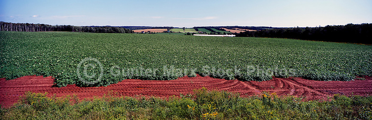 Potato Field at Lower Newton, PEI, Prince Edward Island, Canada - Panoramic View