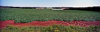 Potato Field at Lower Newton, PEI, Prince Edward Island, Canada - Panoramic View