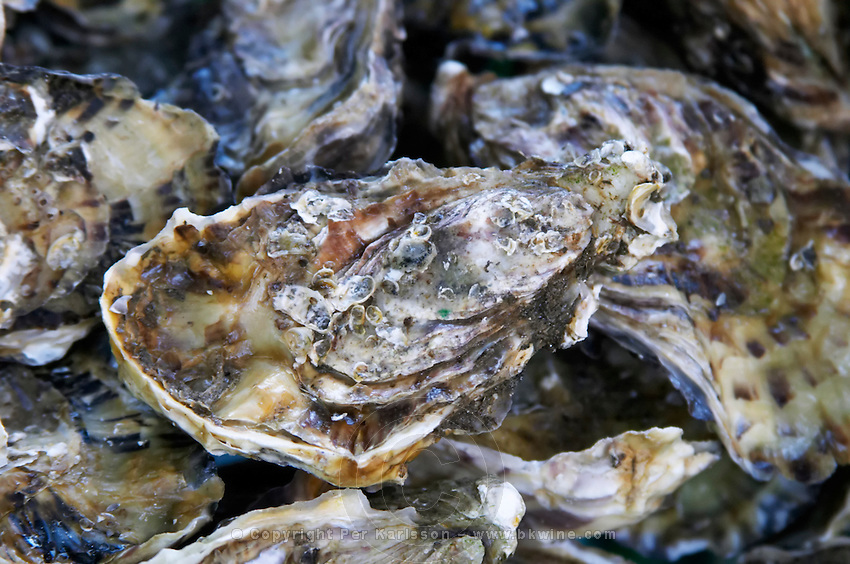 On a street market. Oysters. Bordeaux city, Aquitaine, Gironde, France