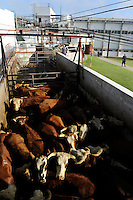 URUGUAY slaughterhouse of MAFRIG Group in Tacuarembo , meat steak and hamburger production for export  / URUGUAY Schlachthof der MARFRIG Gruppe, ein brasilianisches Unternehmen, in Tacuarembo, Schlachtung von Rindern fuer Herstellung von Rindfleisch Steakfleisch Hamburger fuer den Export