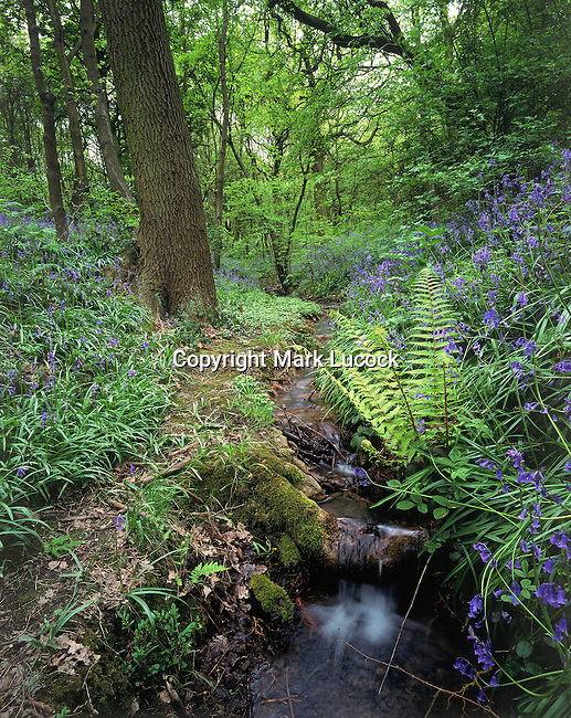 Small cascade and bluebells in spring woodland