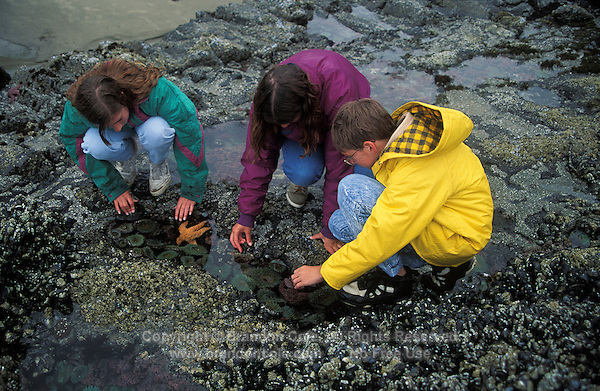 jz11407. children exploring tidepools. Model Released. Oregon coast, USA, Pacific Ocean..Photo Copyright © Brandon Cole. All rights reserved worldwide.  www.brandoncole.com..This photo is NOT free. It is NOT in the public domain. This photo is a Copyrighted Work, registered with the US Copyright Office. .Rights to reproduction of photograph granted only upon payment in full of agreed upon licensing fee. Any use of this photo prior to such payment is an infringement of copyright and punishable by fines up to  $150,000 USD...Brandon Cole.MARINE PHOTOGRAPHY.http://www.brandoncole.com.email: brandoncole@msn.com.4917 N. Boeing Rd..Spokane Valley, WA  99206  USA.tel: 509-535-3489