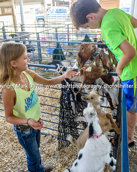 Alena Oberbroeckling of Prole and Gavin Jones of Van Meter feed animal crackers to her goats during a breaking the action of Warren County Fair.