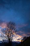 Rosa Wolke, pink cloud, Baum, tree, silhouette, Mauren, Rheintal, Rhine-valley, Liechtenstein.