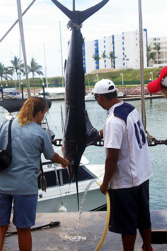 Marlin hanging at dock in Mazatlan, Mexico