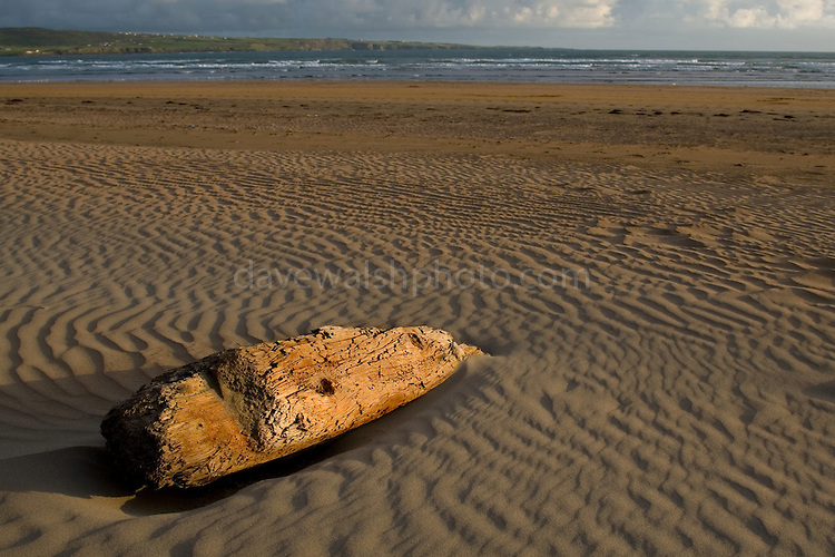 Driftwood on Lahinch Beach, Clare, Ireland..