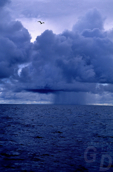 A lone bird, cruising the sky, a huge storm is on the approach near Palau in the Pacific, Micronesia