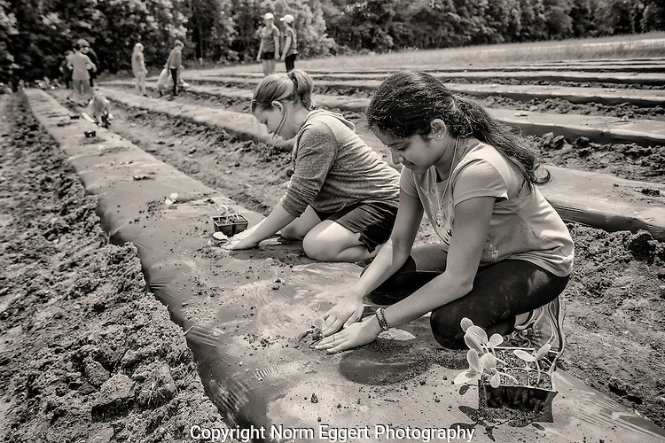 Children from local schools volunteer to work on a vegetable farm
