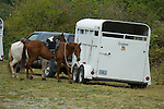 Horses and trailer