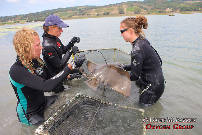 Stephanie, Melissa & Katie Working On Bat Ray