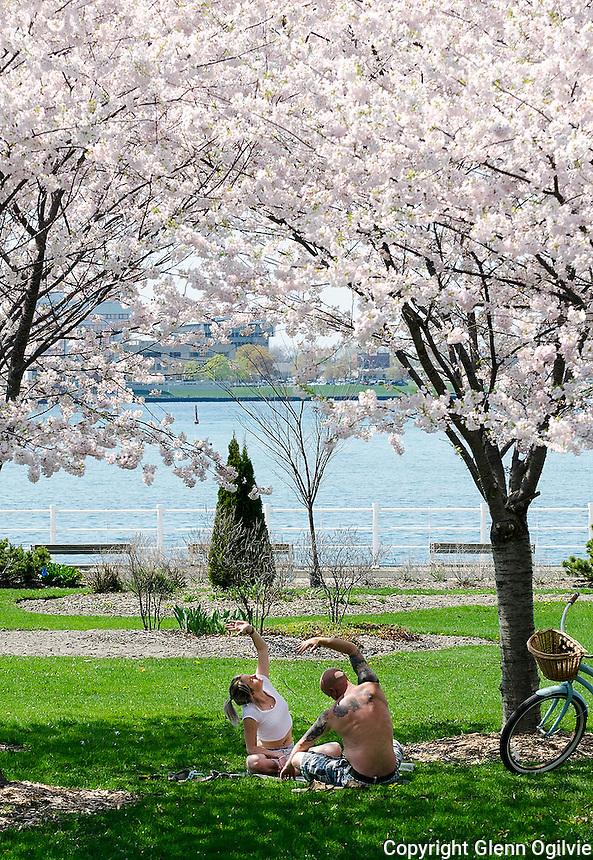 Laura Cresswell and Rob Haggan, of Sarnia found an ideal place to practice yoga under the blossoming trees at Centennial Park. They spent a recent, balmy afternoon taking pictures and exercising under the trees.