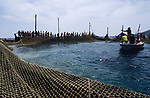 ITALY, Sicily, Egedian island Favignana, La Mattanza, traditional fishing of bluefin Tuna fish, rais (chief) Gioacchino Cataldo conducts the fishermen to close the nets of the death chamber