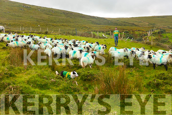 Donnachadh Lynch and Lucky have gone all out with a splash of colour for the All Ireland Final.