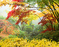 Harp tuner (koto-ji) lantern is shrouded in fog and the fall colors of red and yellow of the japanese maples in the Portland Japanese Garden