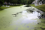 Eutrophication of water in a canal central Rotterdam, Netherlands