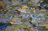 Soft, colorful abstract images of stones and pebbles beneath the cool waters of the Tobacco River in Montana.