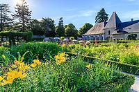 France, Loir-et-Cher (41), Cheverny, château de Cheverny, le jardin bouquetier, lys jaunes, grande marguerite et knautie de Macédoine (Knautia macedonica) devant