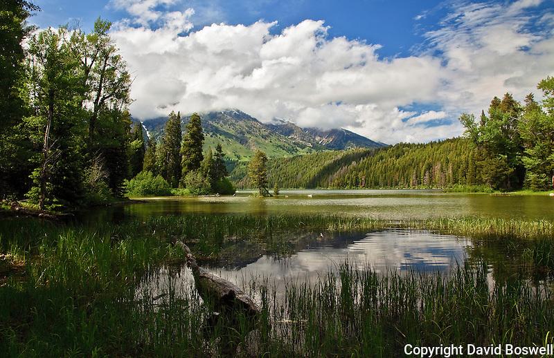Taken in the Laurence Rockefeller Preserve in Grand Teton National Park