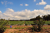 Stock photo of strawberry field