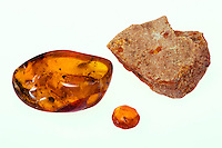 AMBER AND COPAL<br /> Polished Amber and Rough Amber<br /> Clockwise from left: polished Dominican amber, polished Dominican amber with insect, and rough amber. Amber is fossilized tree resin. Rough amber is fossilized tree resin which has been extracted but not refined or polished.