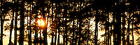 Sunset in the forrest during the 1st August Party of the swiss contingent. Photo: André Jörg/ Scouterna