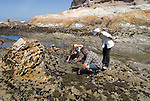 California, San Luis Obispo County: Montana de Oro state park offers scenic coastal views and tide pool exploring.   People searching tide pools at low tide..Photo caluis186-71247..Photo copyright Lee Foster, www.fostertravel.com, 510-549-2202, lee@fostertravel.com