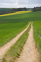 Europe/France/Bourgogne/89/Yonne/Env de Tonnerre: Chemin dans la campagne