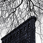Square black and white image of the Falt Iron Building and leafless tree, Manhattan, New York.